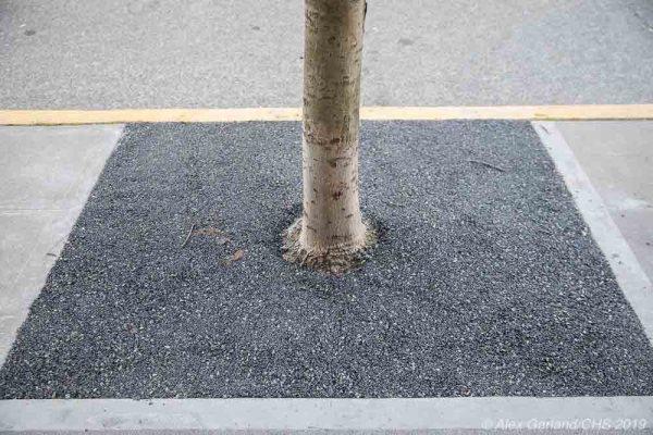 rubbertreewells-5.jpg