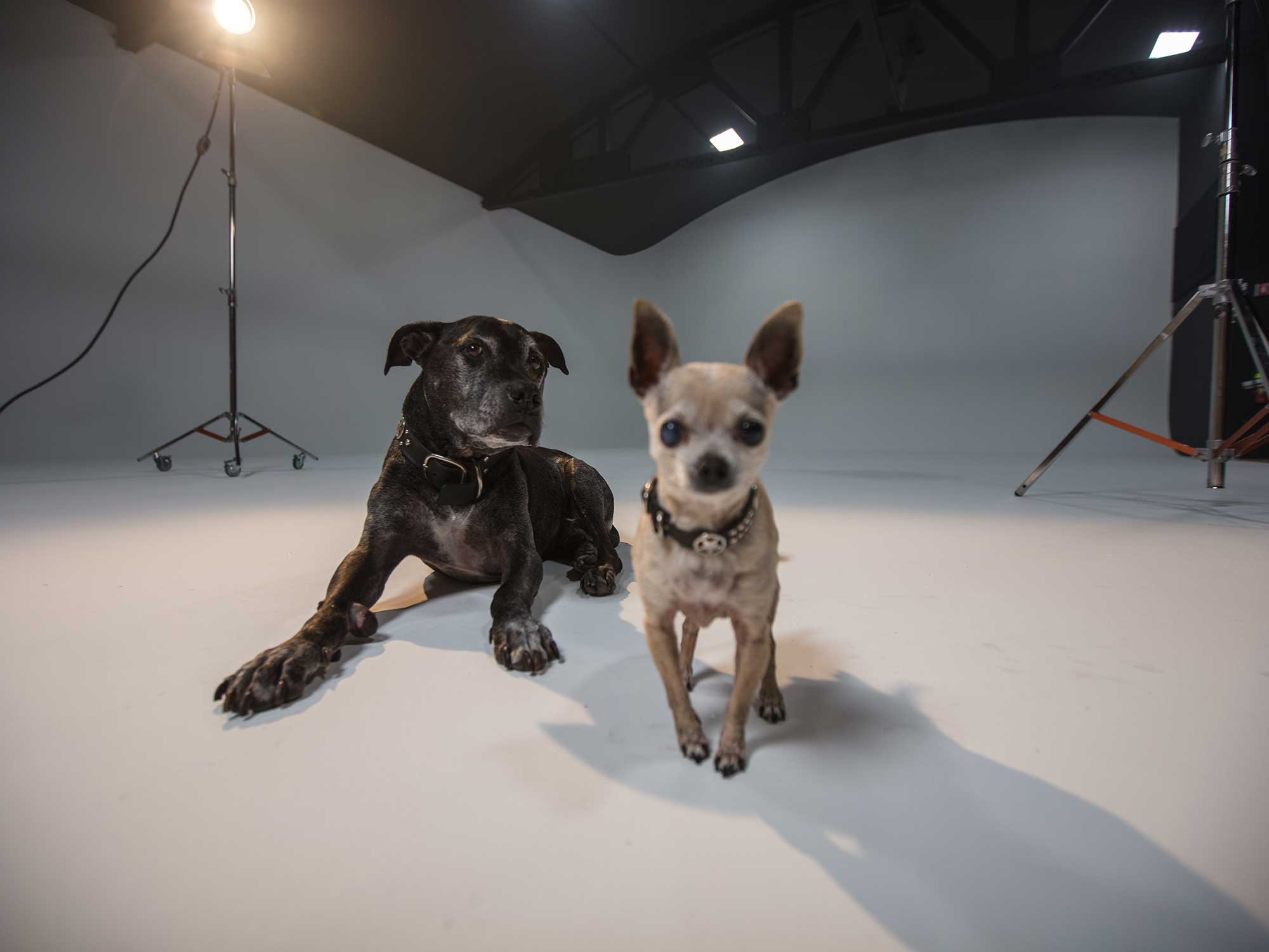 Book Now - With over 5,000 square feet of production space, Mama Dog Studios has a large black-out sound stage complete with dedicated 3-Phase power, Lighting Grid, and SDI feed to posh viewing room and makeup room.
