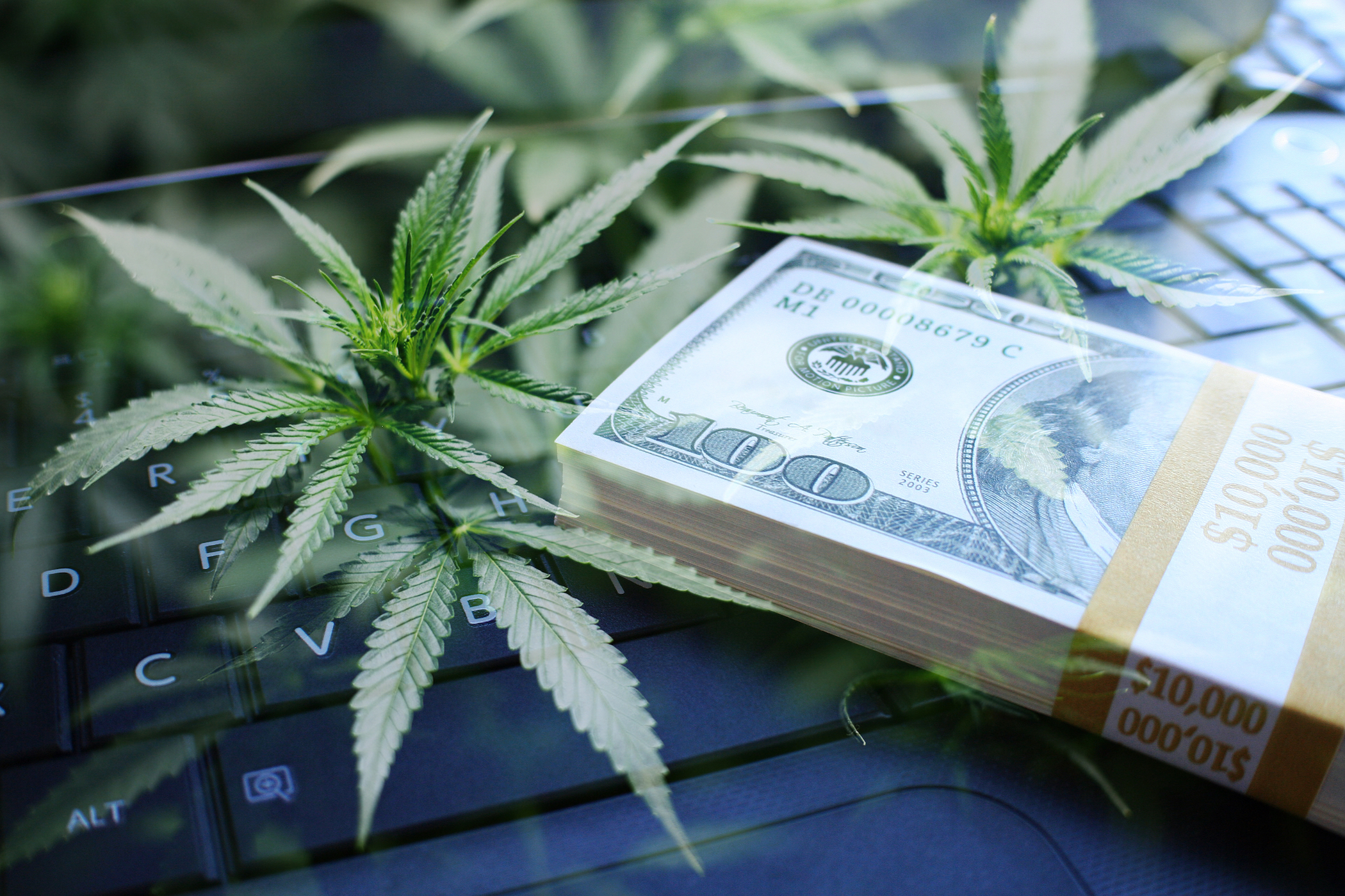 The budding business of cannabis - Media Friendly's sister company Seriously Fun Media is dedicated to connecting business owner and entrepreneurs in the cannabis, hemp and medical marijuana fields.