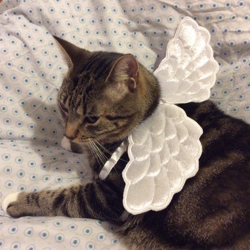 My angel, aka my cat, is here for your religious conspiracies and fallen angels.