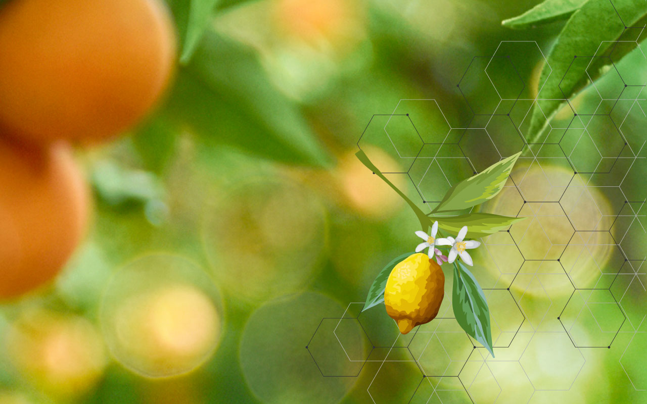 Citrus Research - State-of-the-art facilities