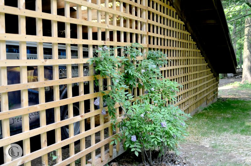 GreenRoots-lattice-800x530.jpg