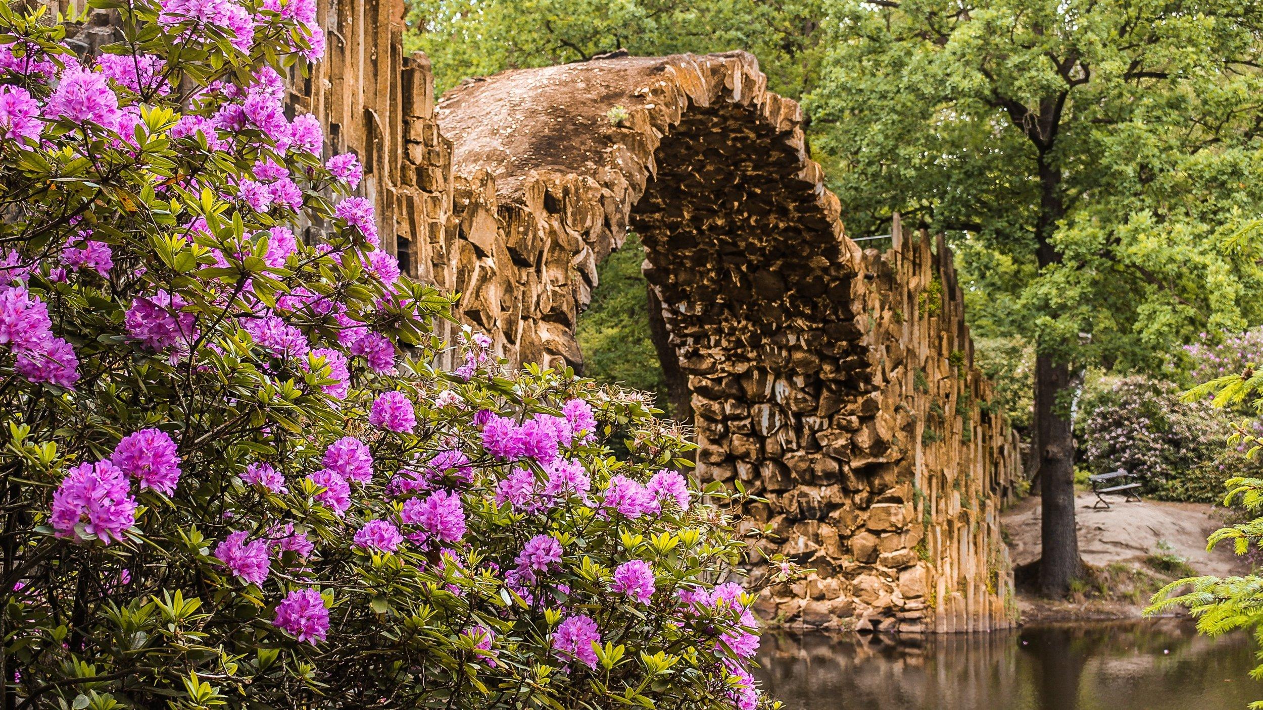 rhododendron-bridge-2887354.jpg