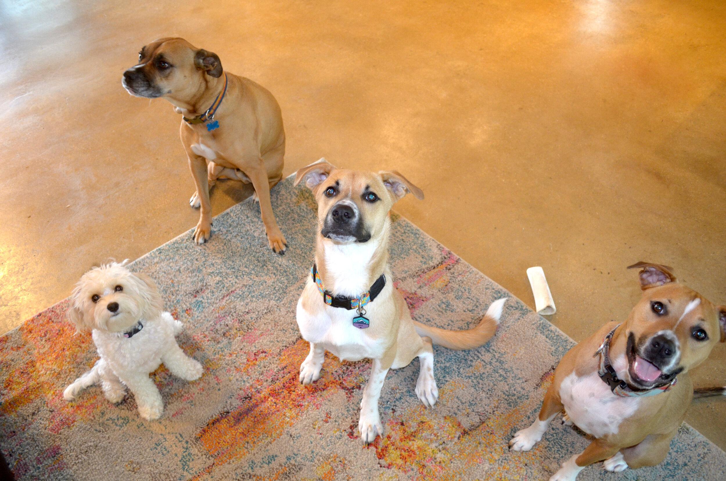 4 dogs looking.jpg