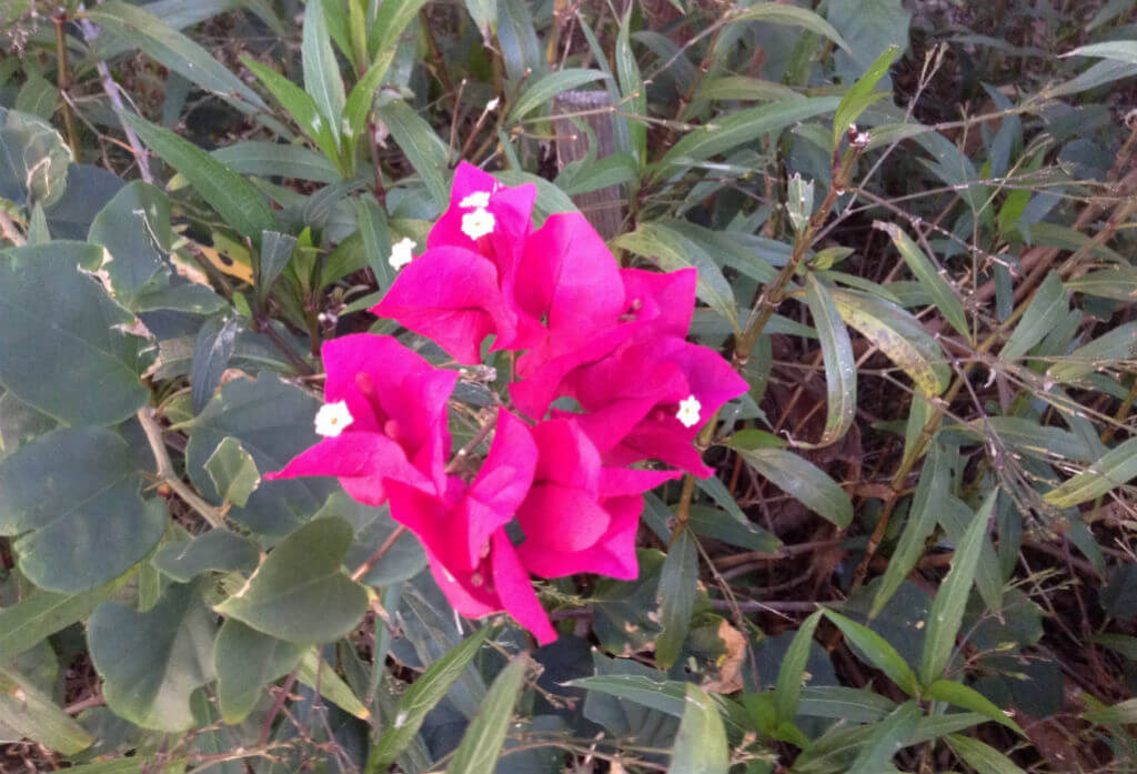 Lonely-Flower-Sharing-its-Beauty-Natures-Pages.jpg