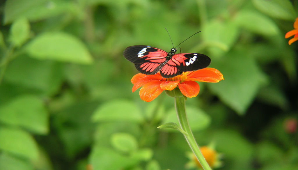 Florida-Butterfly-on-Plant-Natures-Pages.jpg