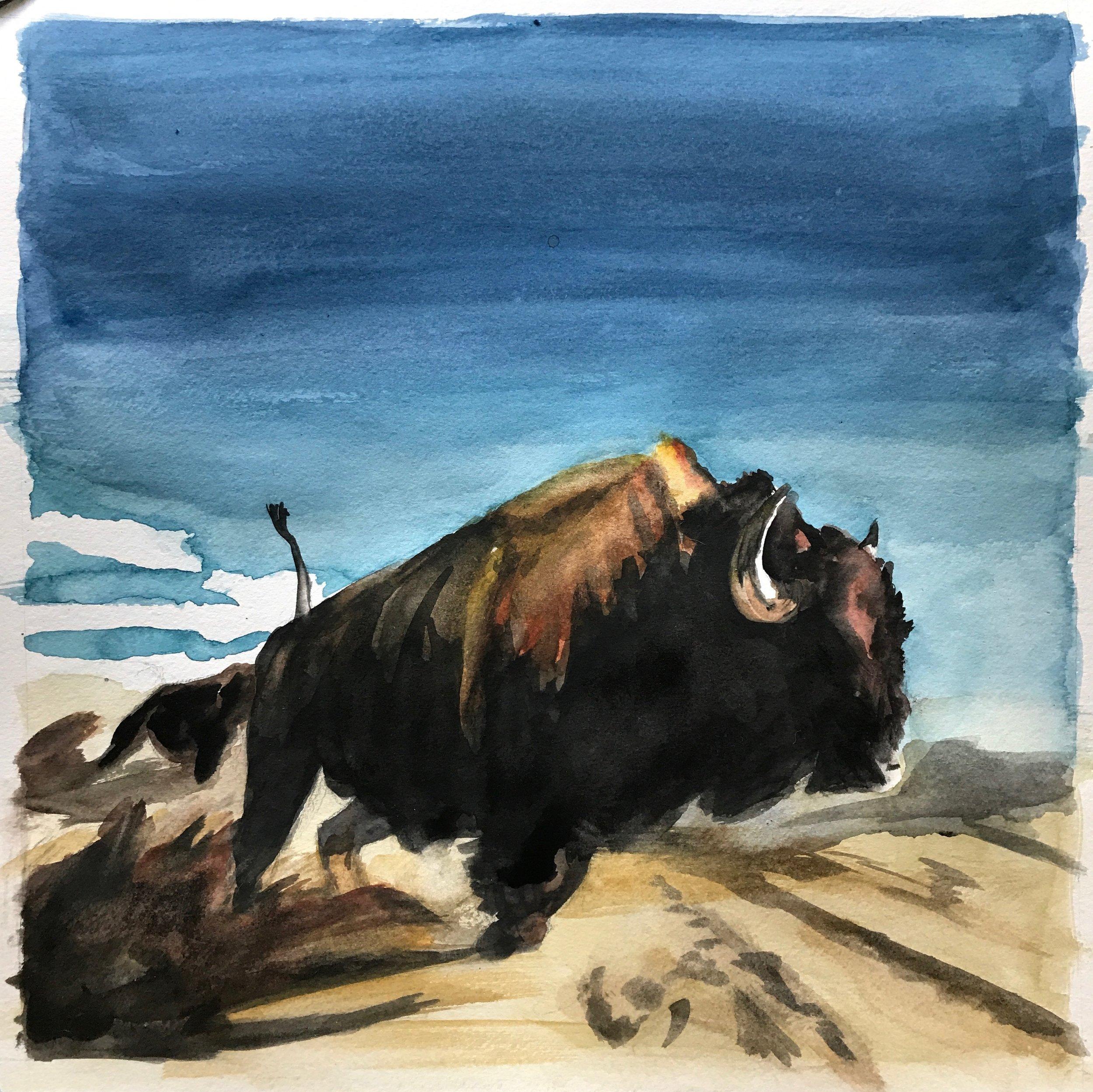 Buffalo Blue Sky