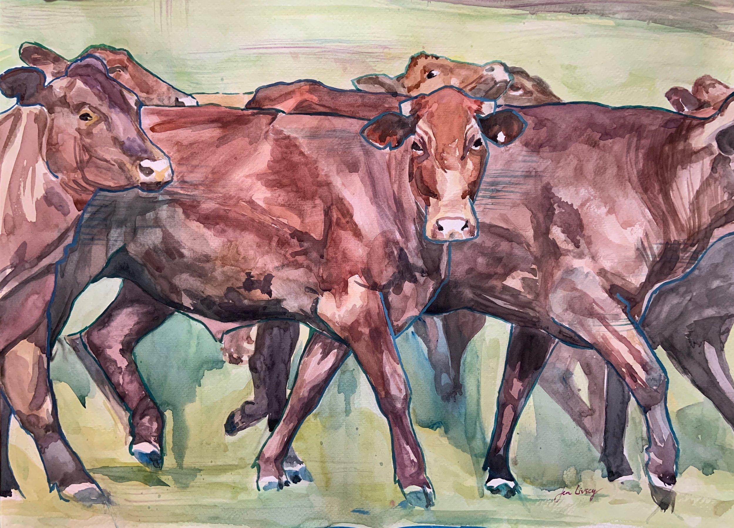 Santa Gertrudis Herd