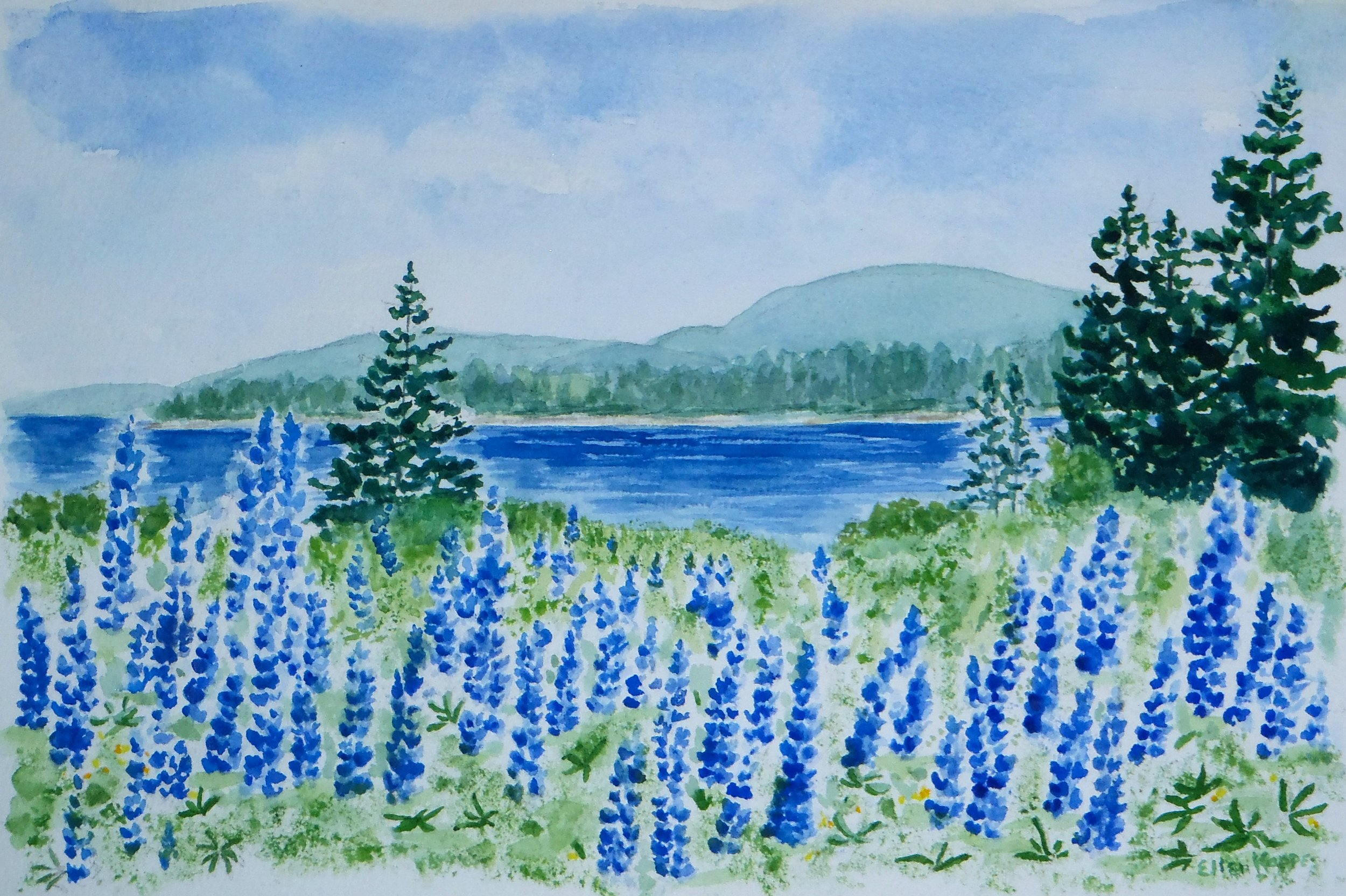 Lupines Just Before , watercolor