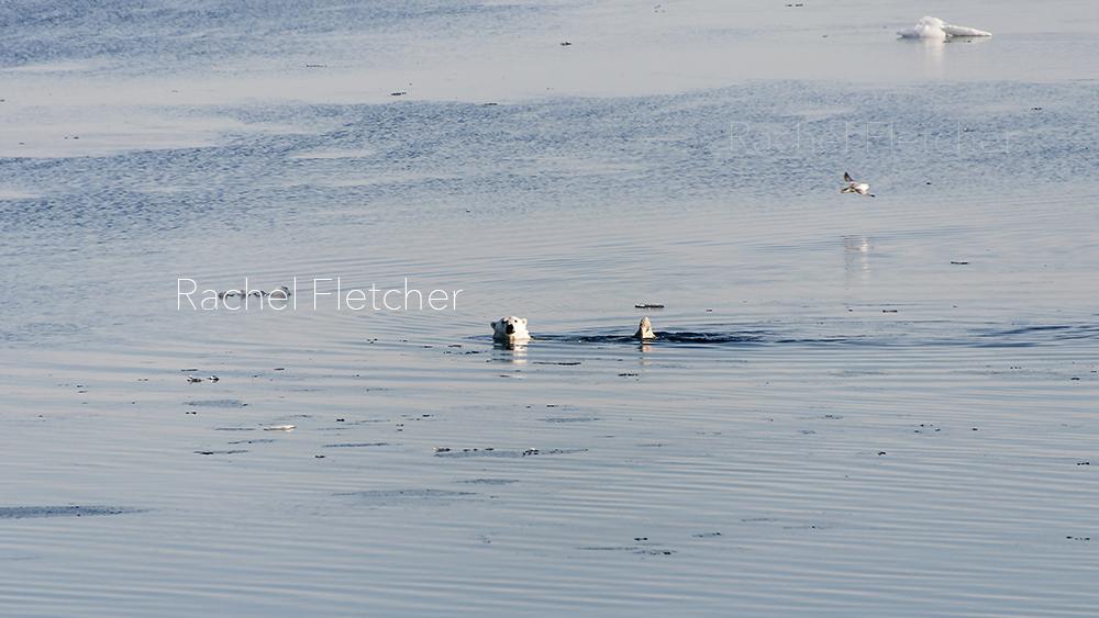 rachel+lee+fletcher knoxville tennessee polar bear