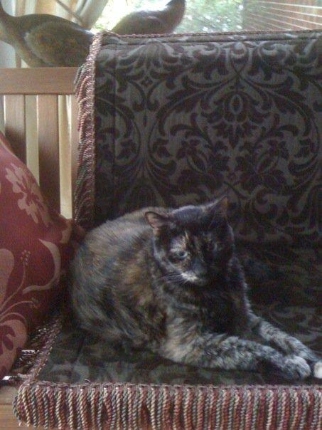 kitty rachel lee fletcher knoxville tenneessee