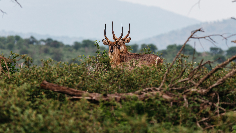 Wildlife_1.jpg