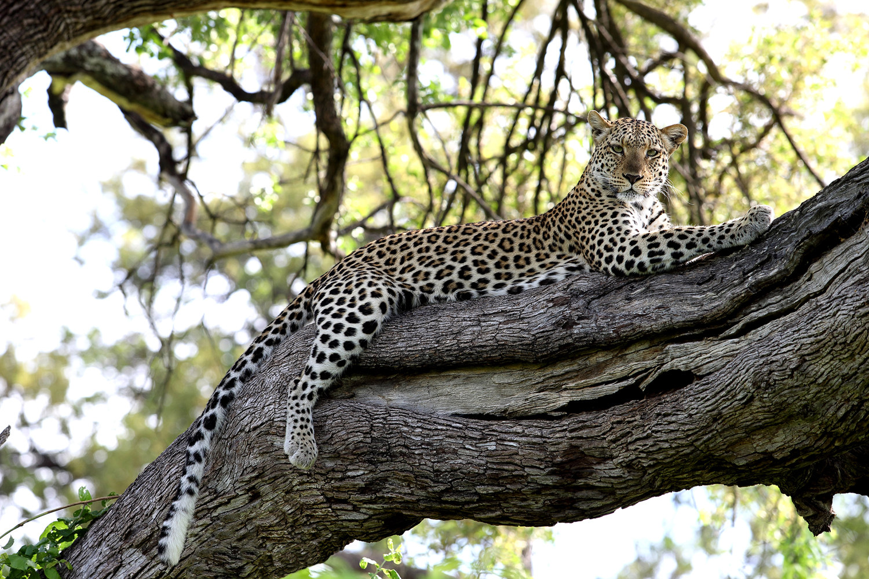Wildlife---JBG_065.jpg