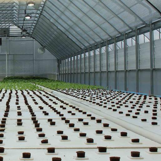 Greenhouse at South River Aquaponics