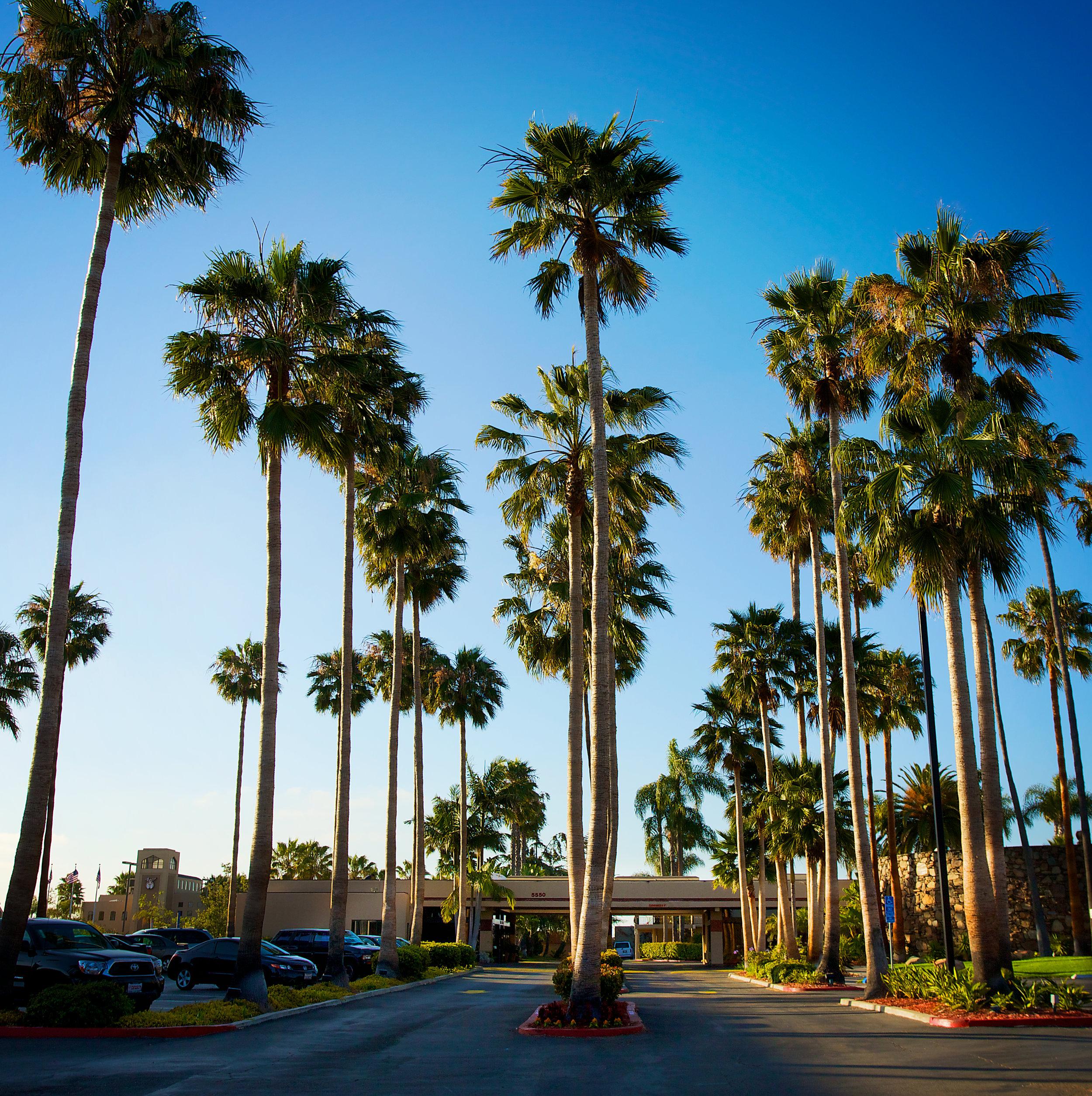 longview of palm trees