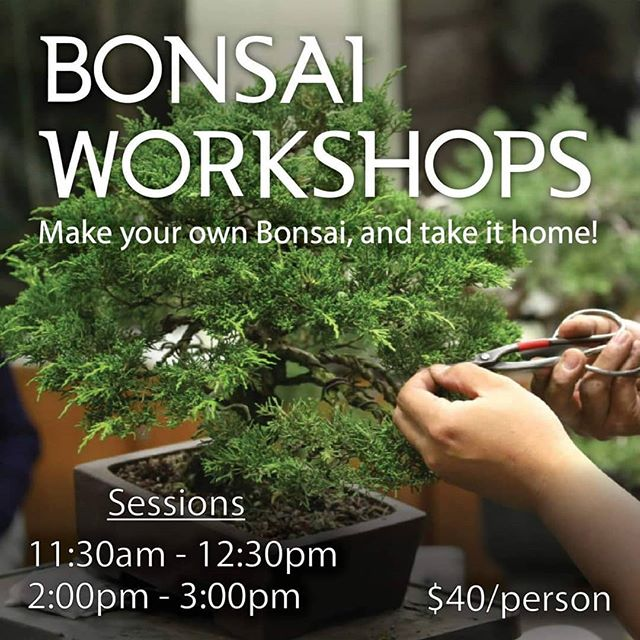 Ever wanted to create a living piece of art? ! We're hosting two bonsai workshops at Taste of Japan. Spaces are limited, so don't miss out on your chance to create a lifetime of beauty for your home! For more details, see our website link in the bio!  #japan #culture #bonsai #plants #relax #art #longbeach #thepike #japaneseart