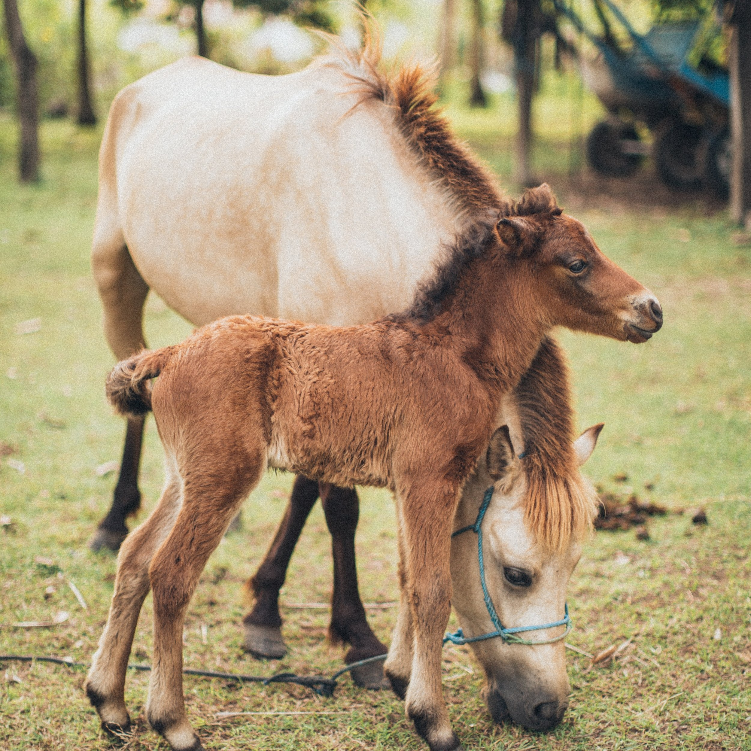 News - Horse News from Australia and around the world. Horse health, welfare, research, biosecurity, horse industry and training news.
