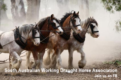 South Australian Working Draught Horse Association