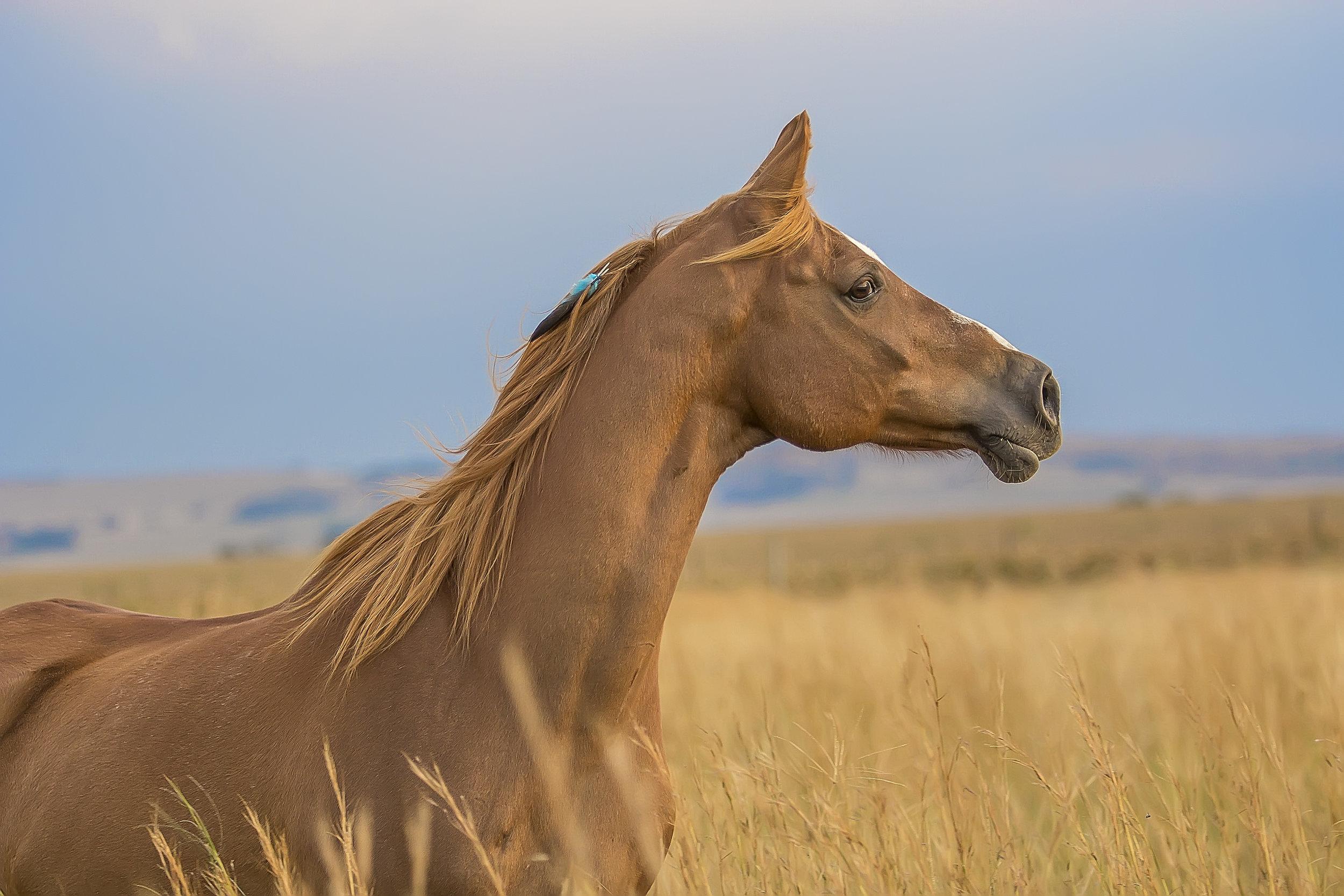 Horse looking away