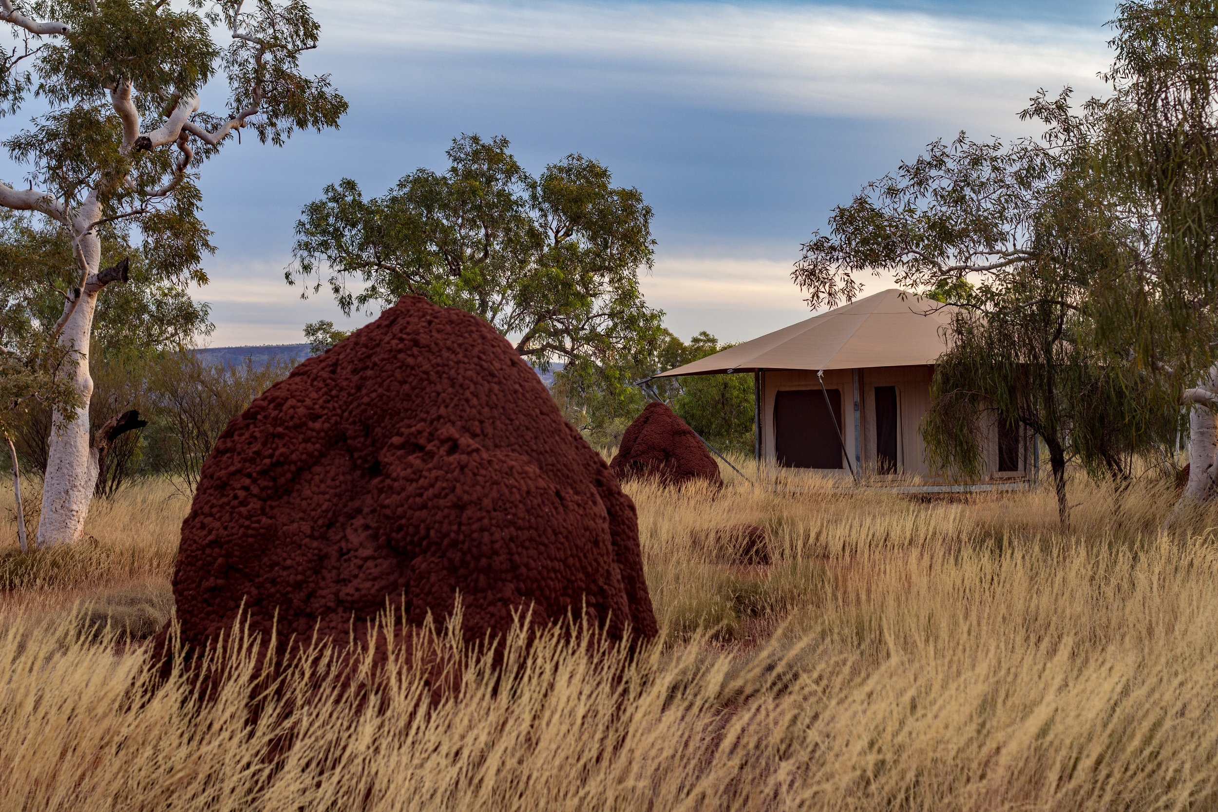 Huge termite mounts next to Eco Tents in Karijini National Park, Western Australia