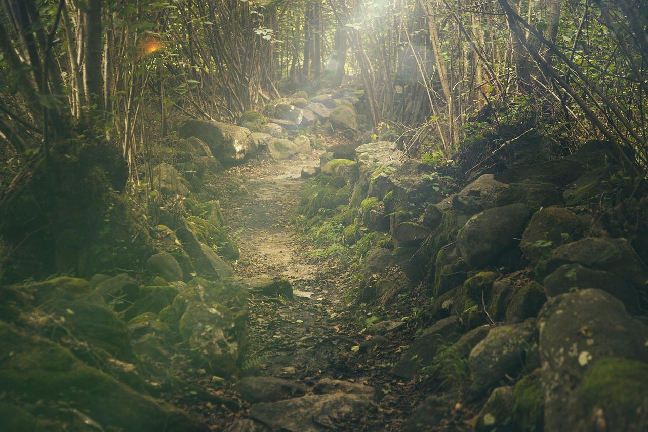 forest_1280.jpg