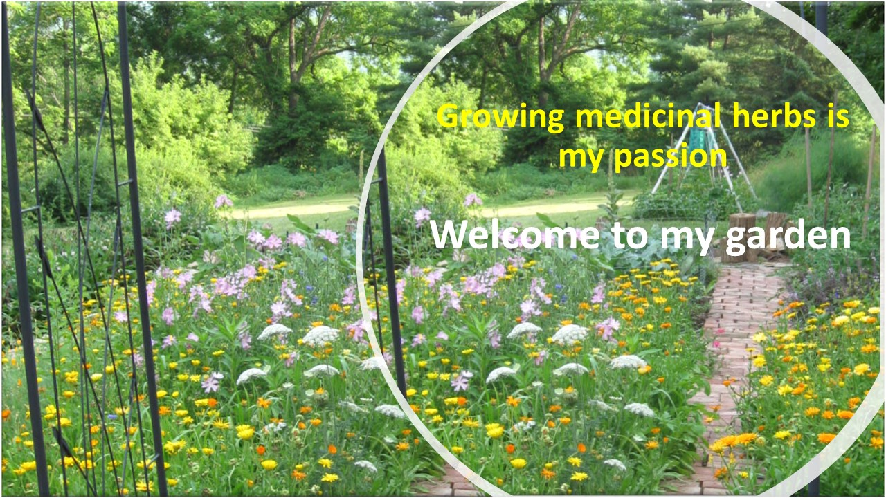 welcome to my garden.pdf.jpg