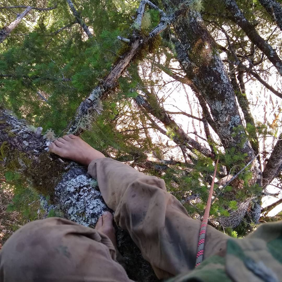 HRC is Also Endangering the Tree-Sitter by Falling Trees Dangerously Close to Tree Sitter Position : - See Video Below