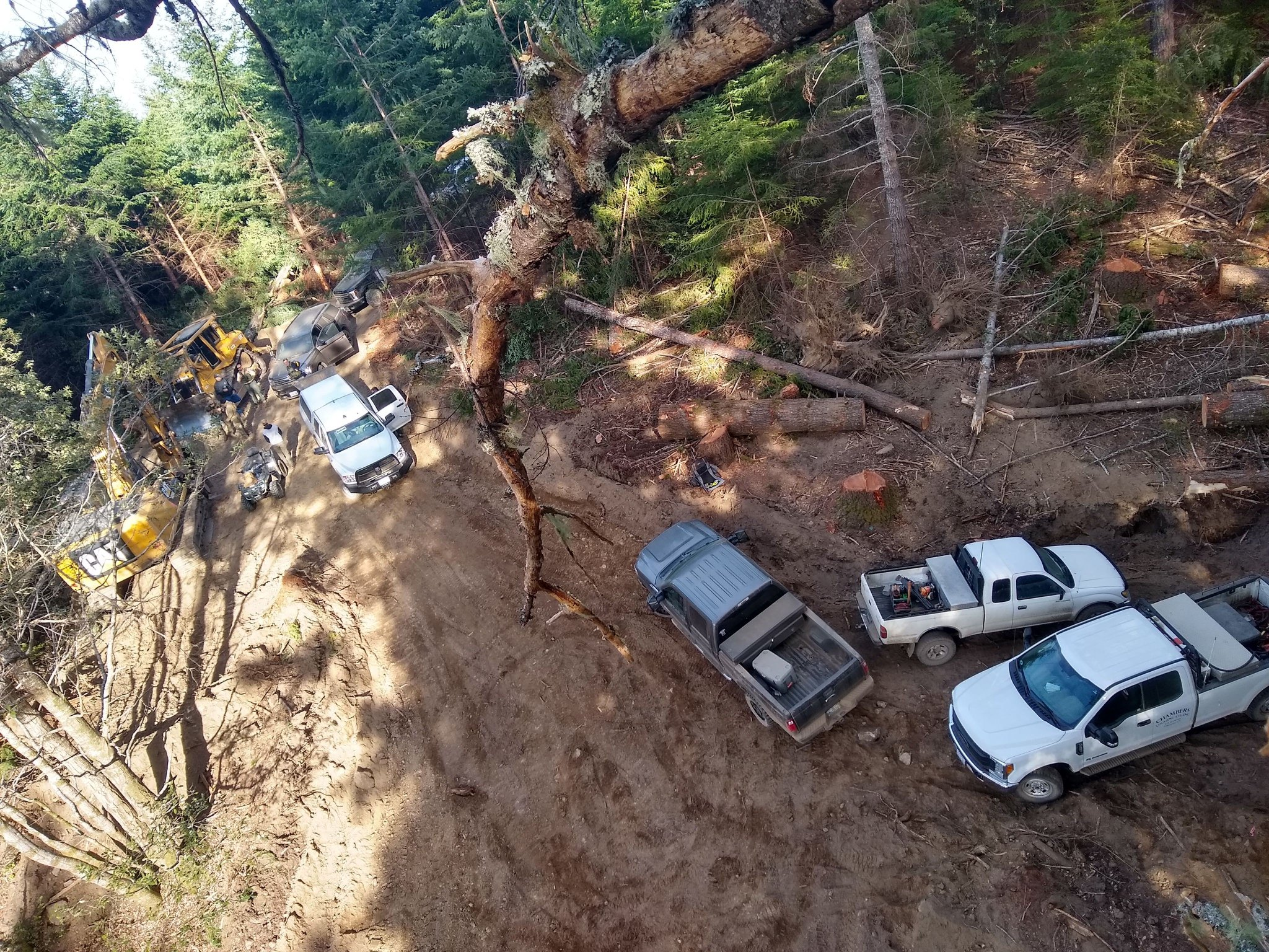 Urgent Alert! Humboldt Redwood Company is felling trees intentionally & dangerously close to Rook's Tree Sit. -