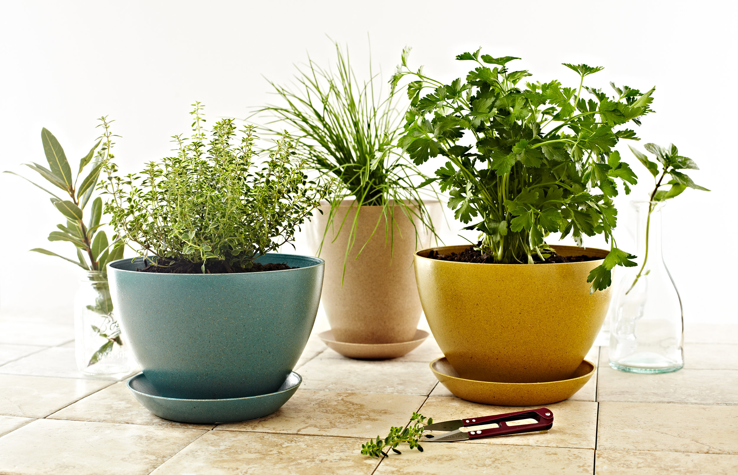 Still-life of herbs in pots on countertop