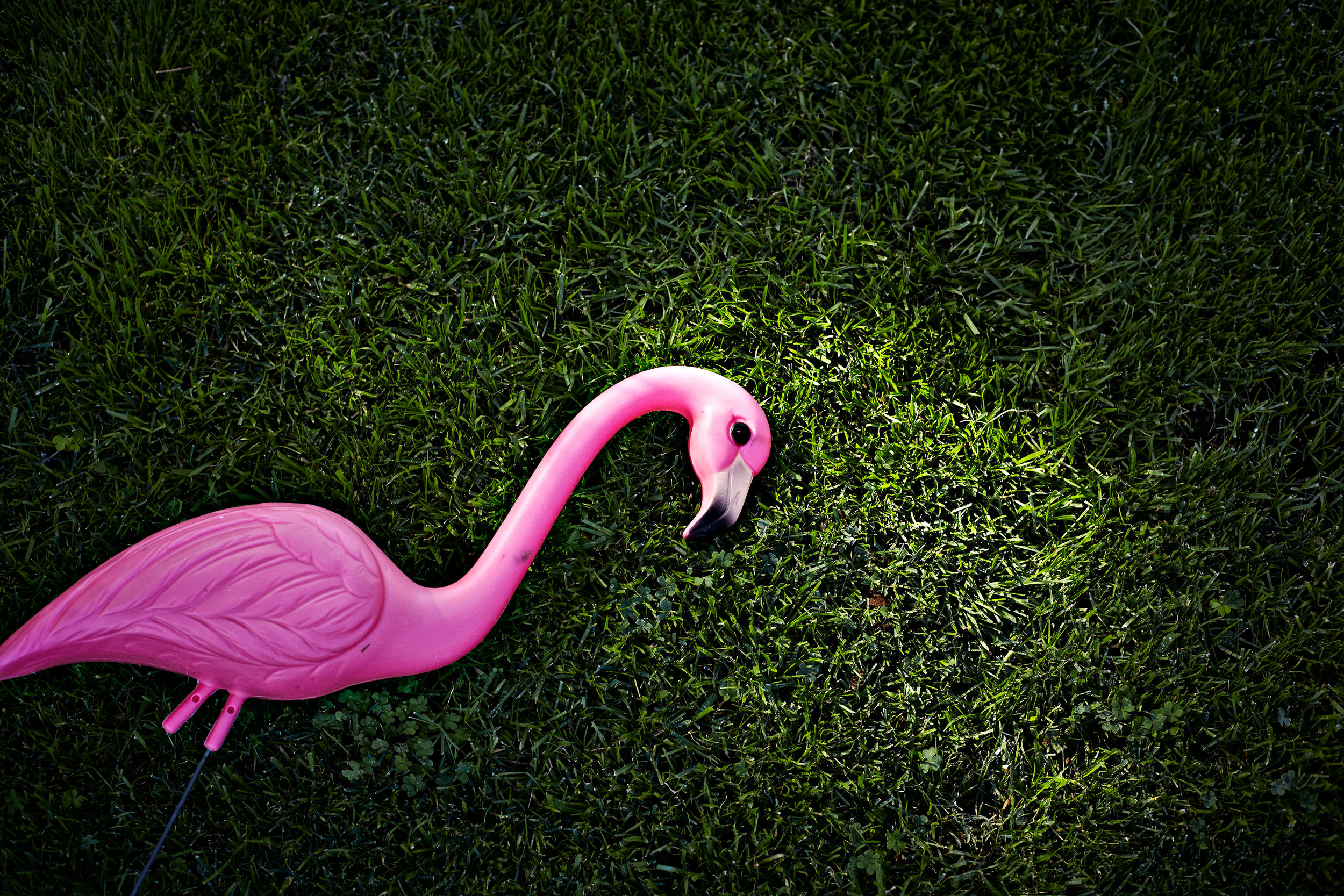 Plastic pink flamingo on green grass