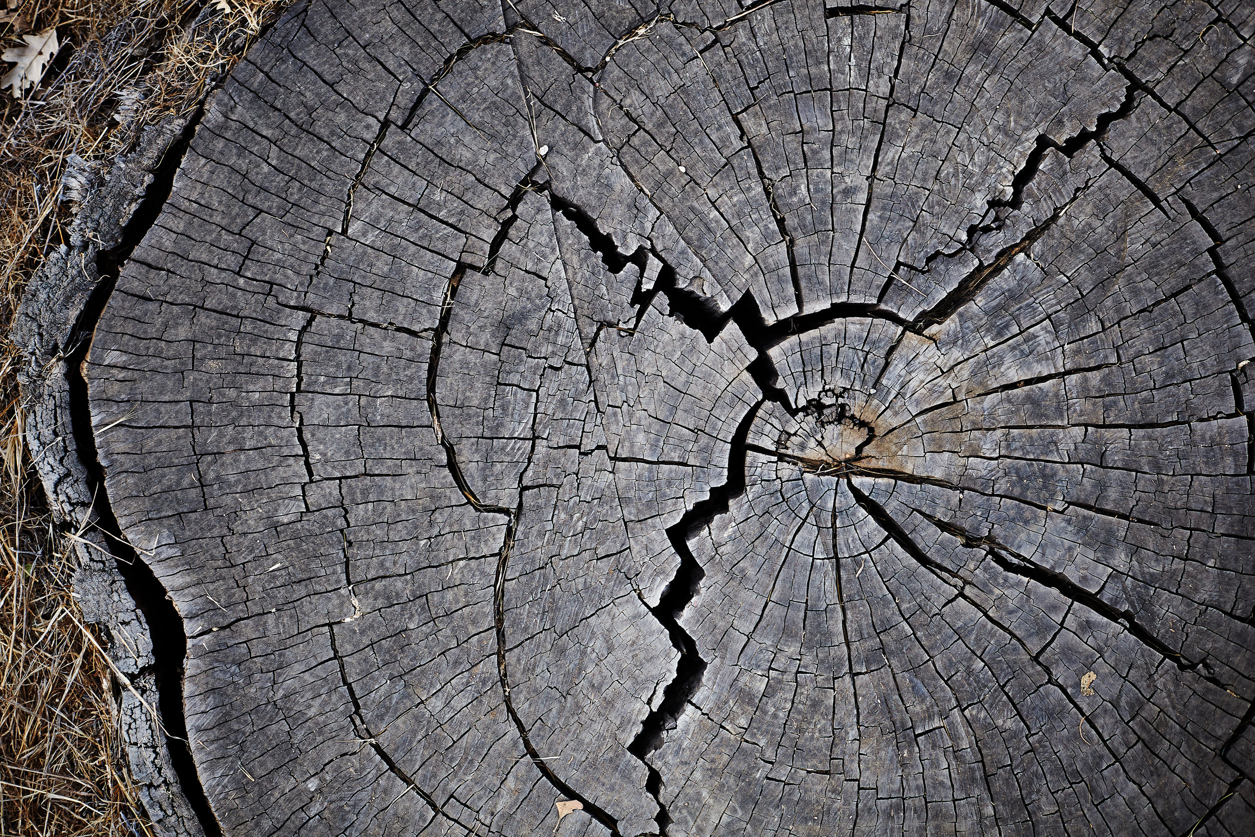 close up cross-section of tree trunk