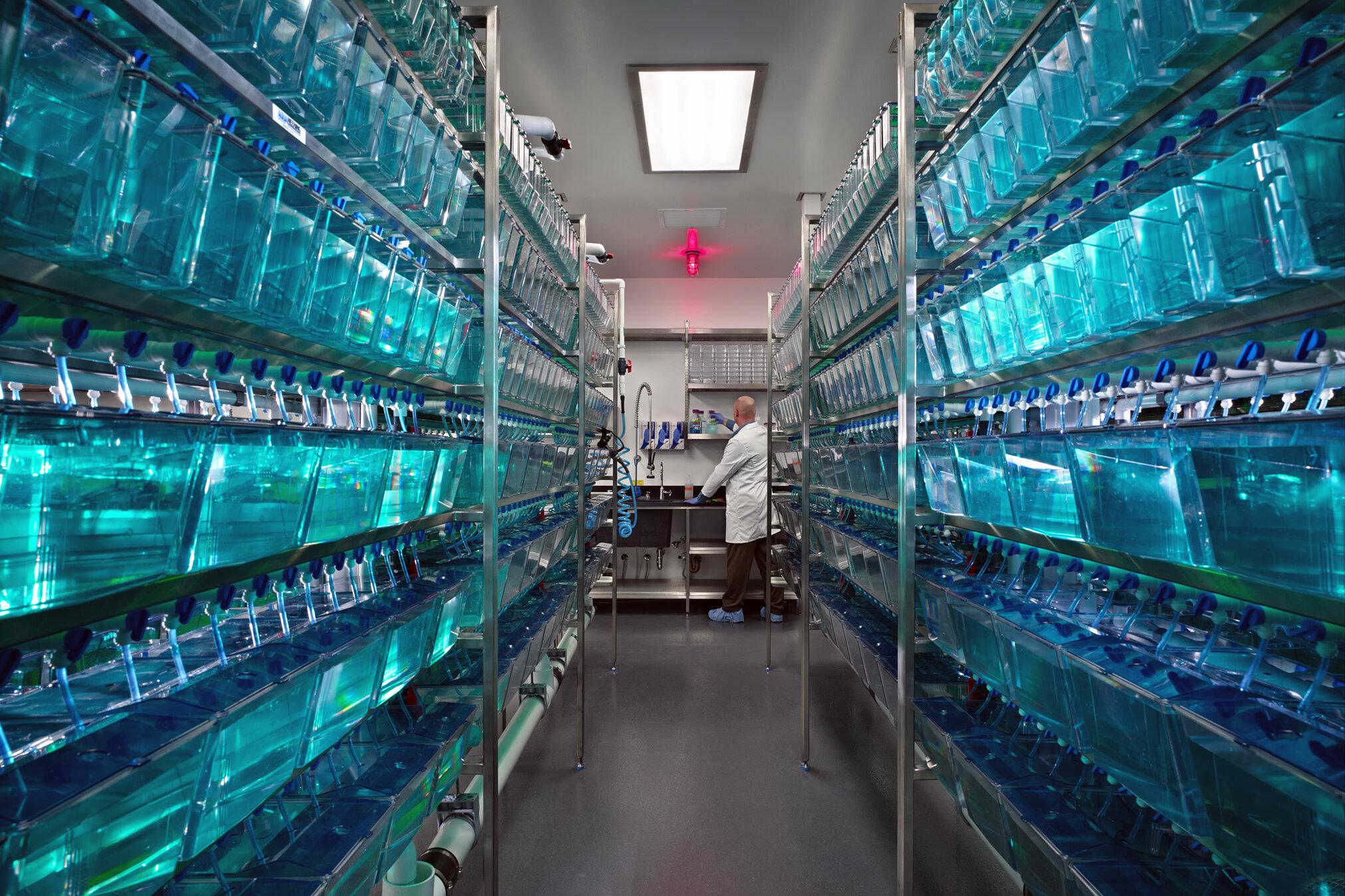 Aquatics Suite, Seattle Children's Research Institute
