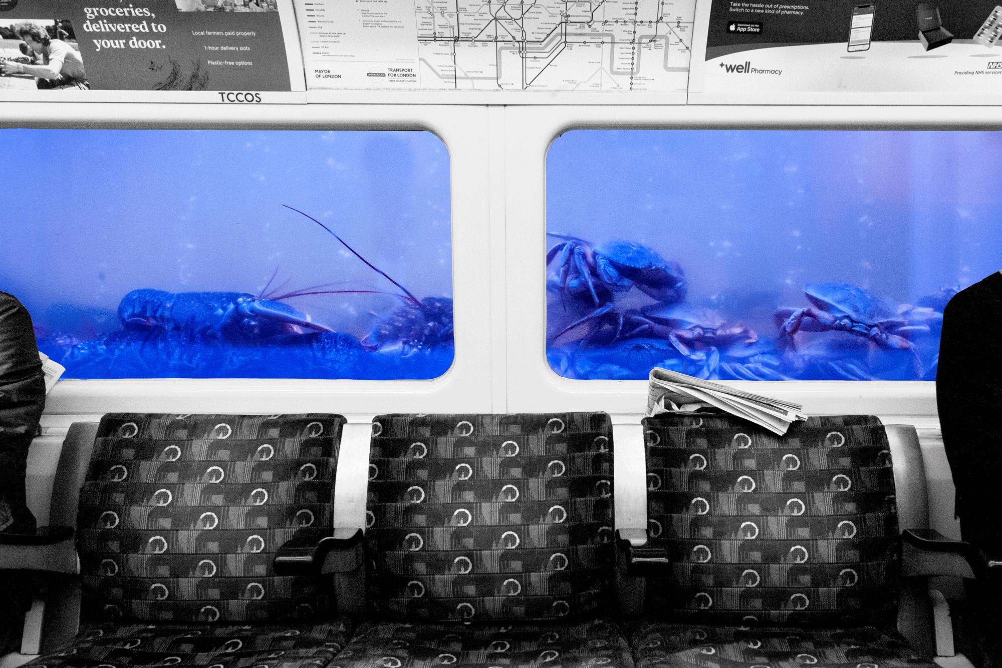 Crabby Commute    London, Spring 2019