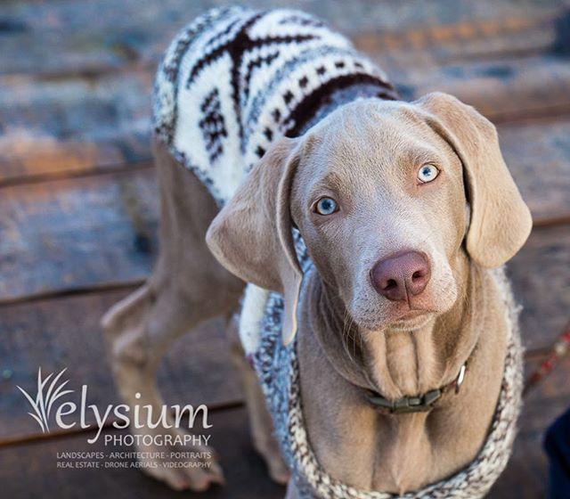 Everyone's best friend. Canon EOS 5D III, 100mm f/2.8 L  #pets #petsofinstagram #petphotography #animal #animals #dog #dogs #dogsofinstagram #dogs_of_instagram #dogstagram #mansbestfriend #petportrait