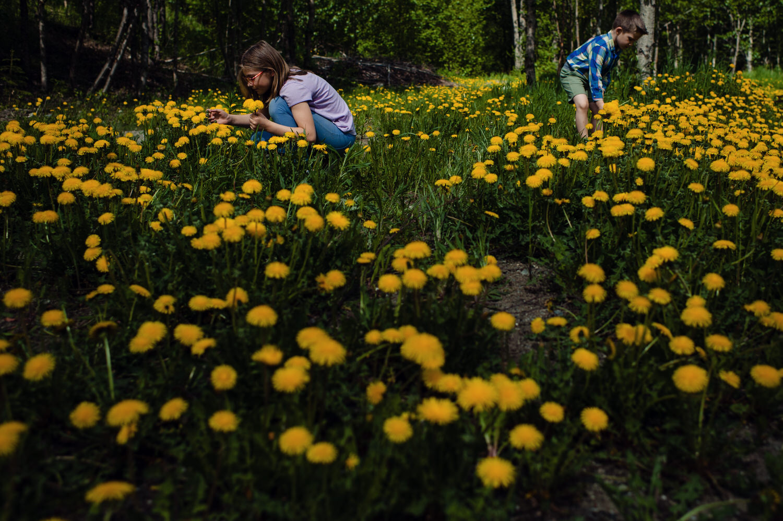 June-dandelion-fun (1).jpg