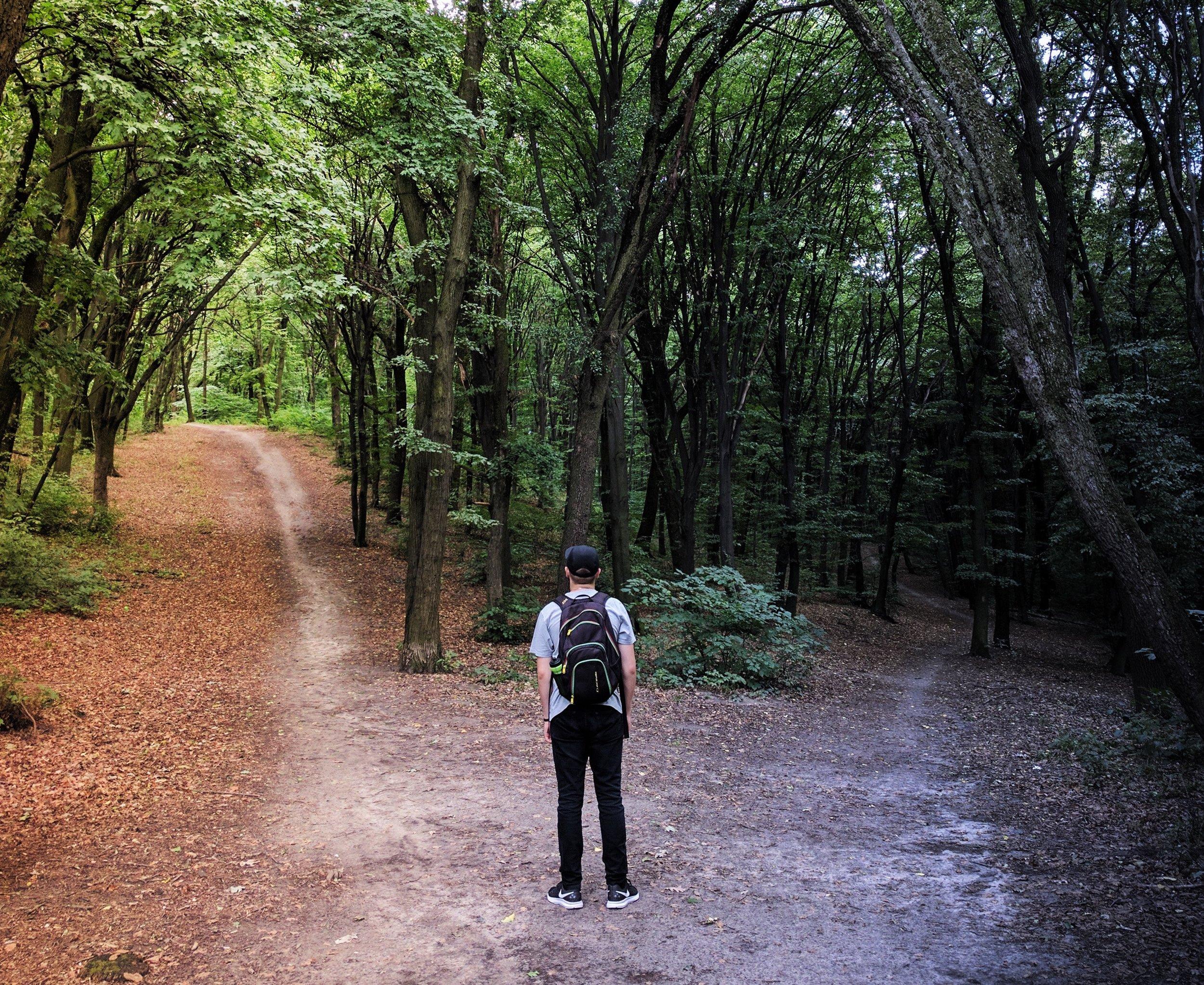Fork in the Woods.jpg