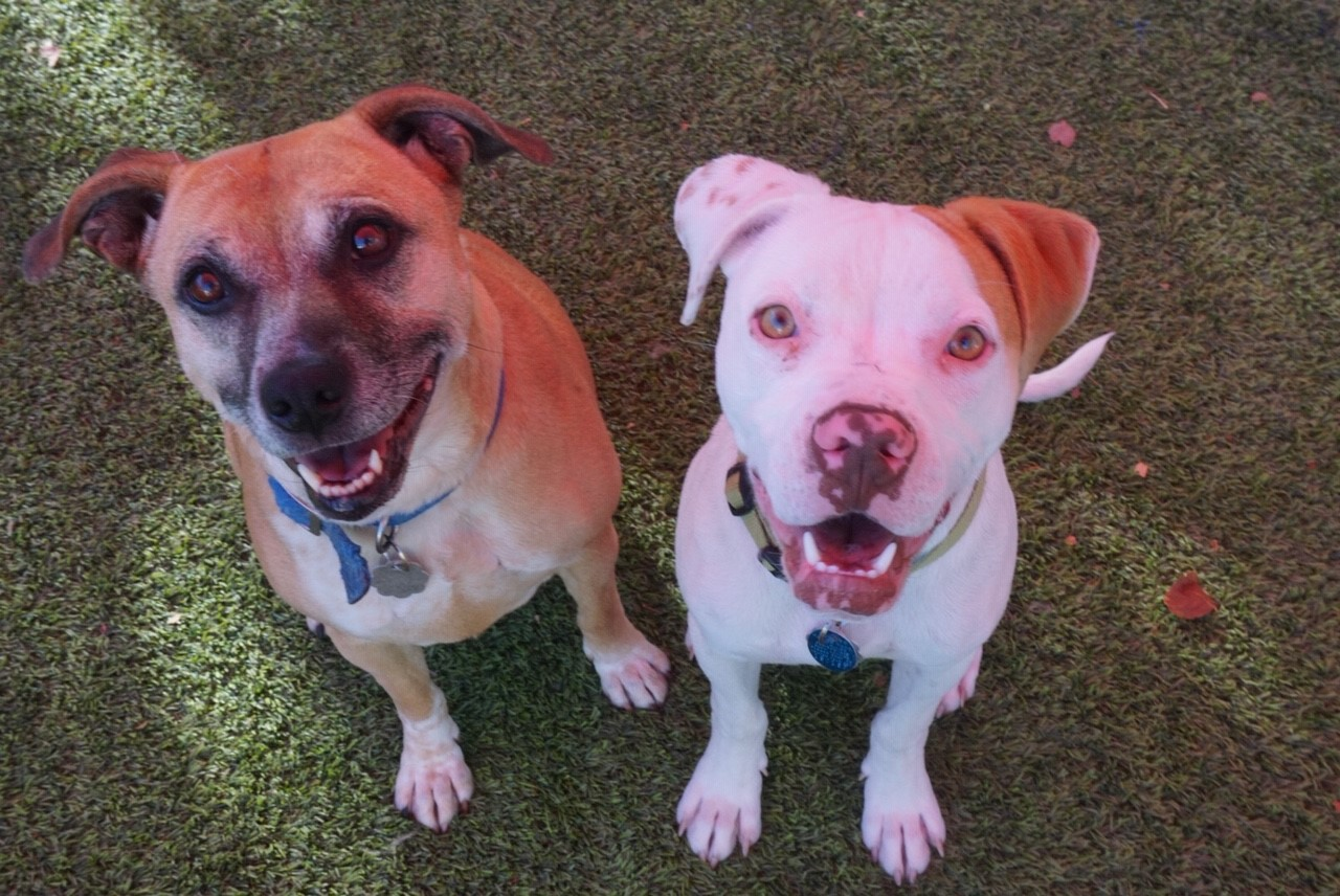 2 dogs smiling.jpg