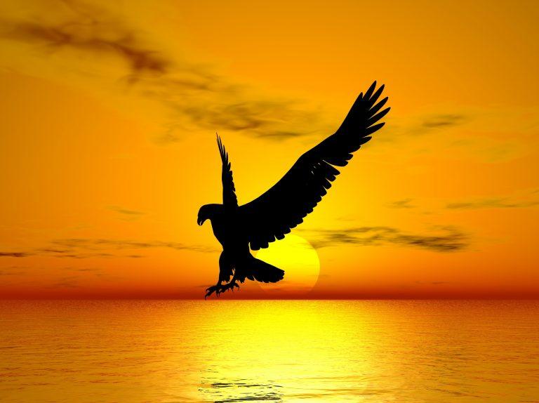 Freedom-768x574.jpg