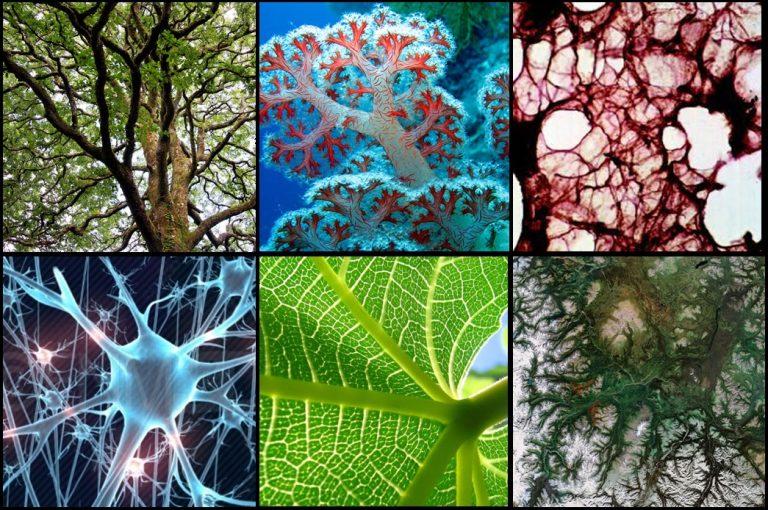 Biodiversity-768x510.jpg