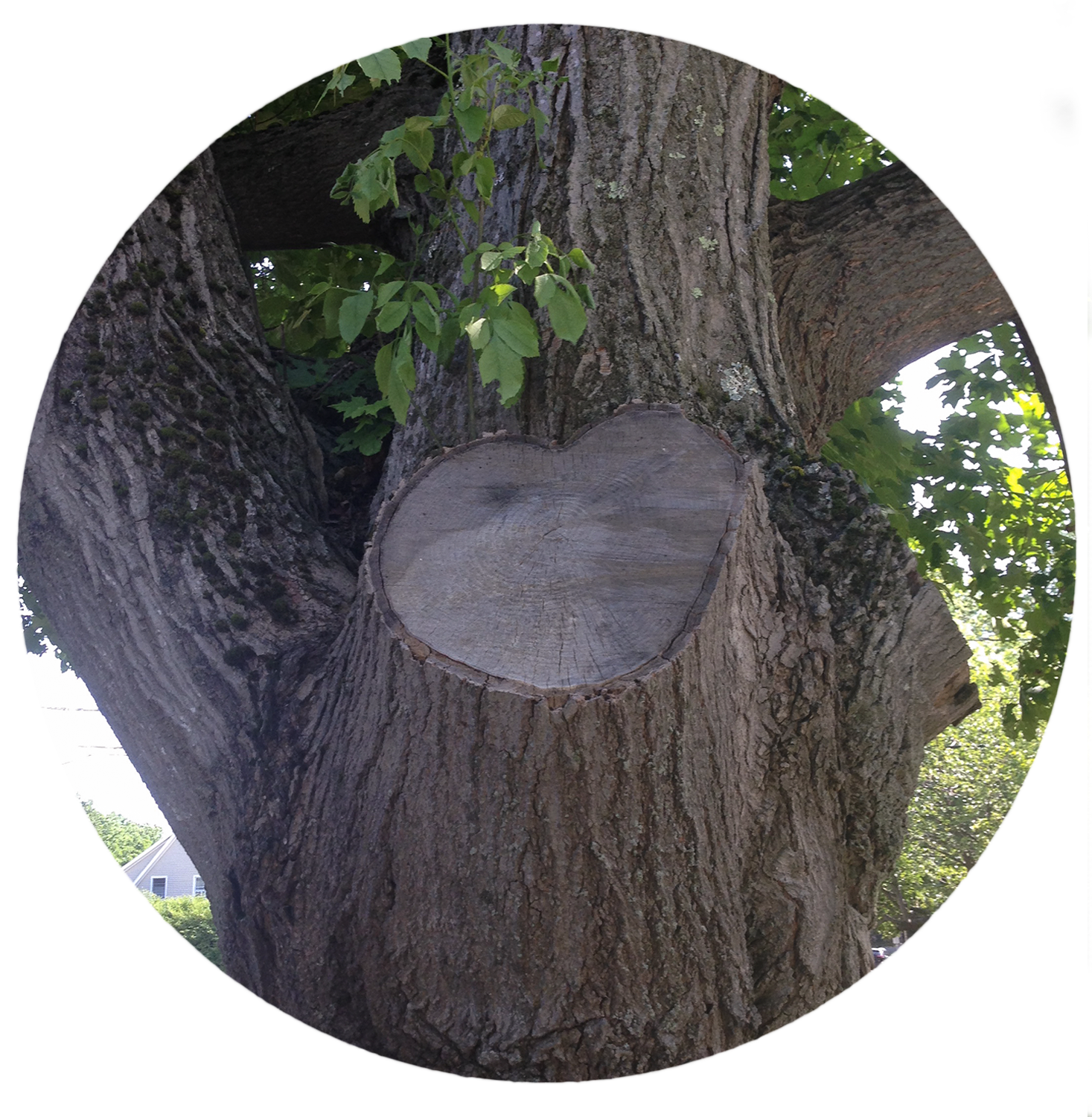 treeheart.png