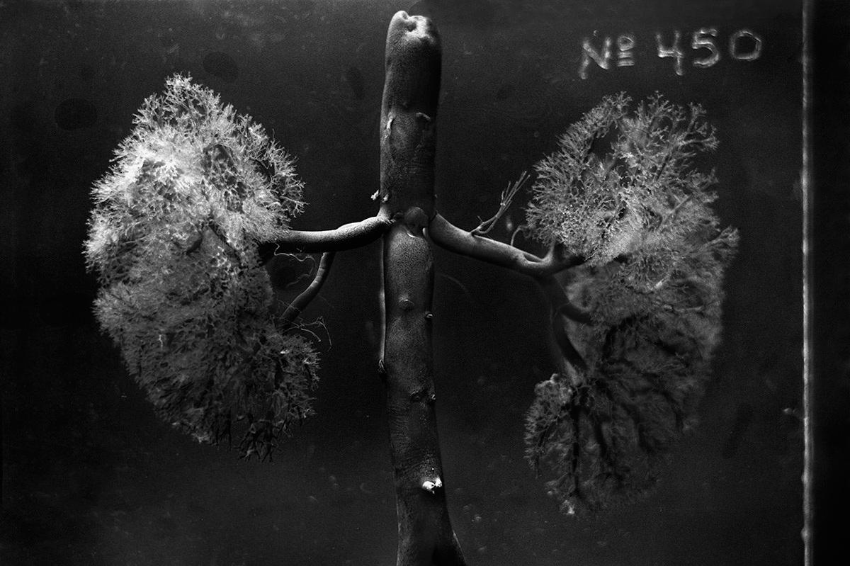 lowres-detail-of-arborem-by-daniel-malva-artboom.jpg