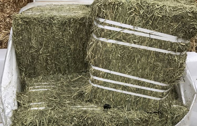 TIMOTHY HAY - We buy hay by the semi-load from up north for our own horses and to sell as inventory permits. Ask for availability.