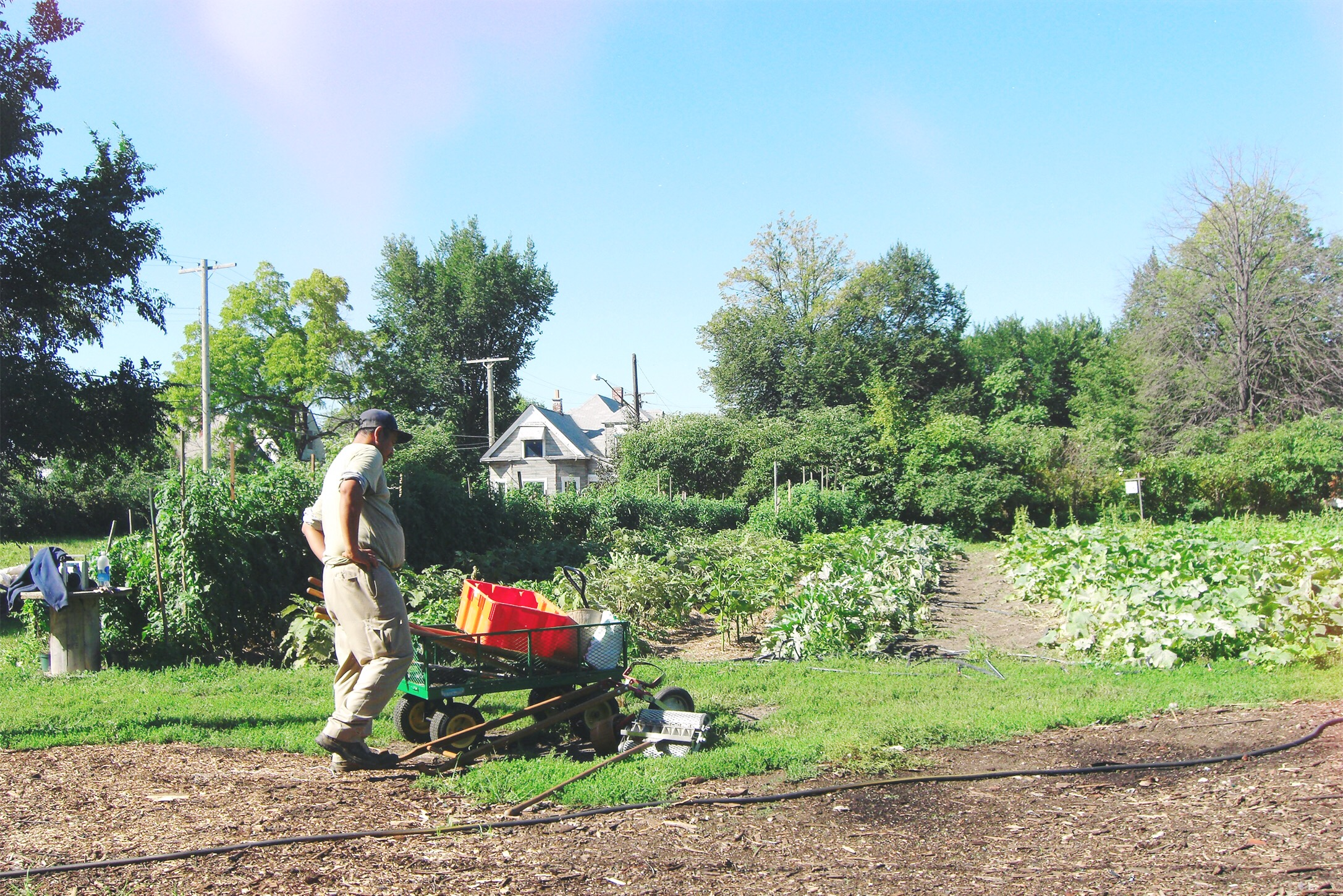 Volunteers tending the crops at Eartworks Urban Farm in Detroit's sparsely populated East Side.