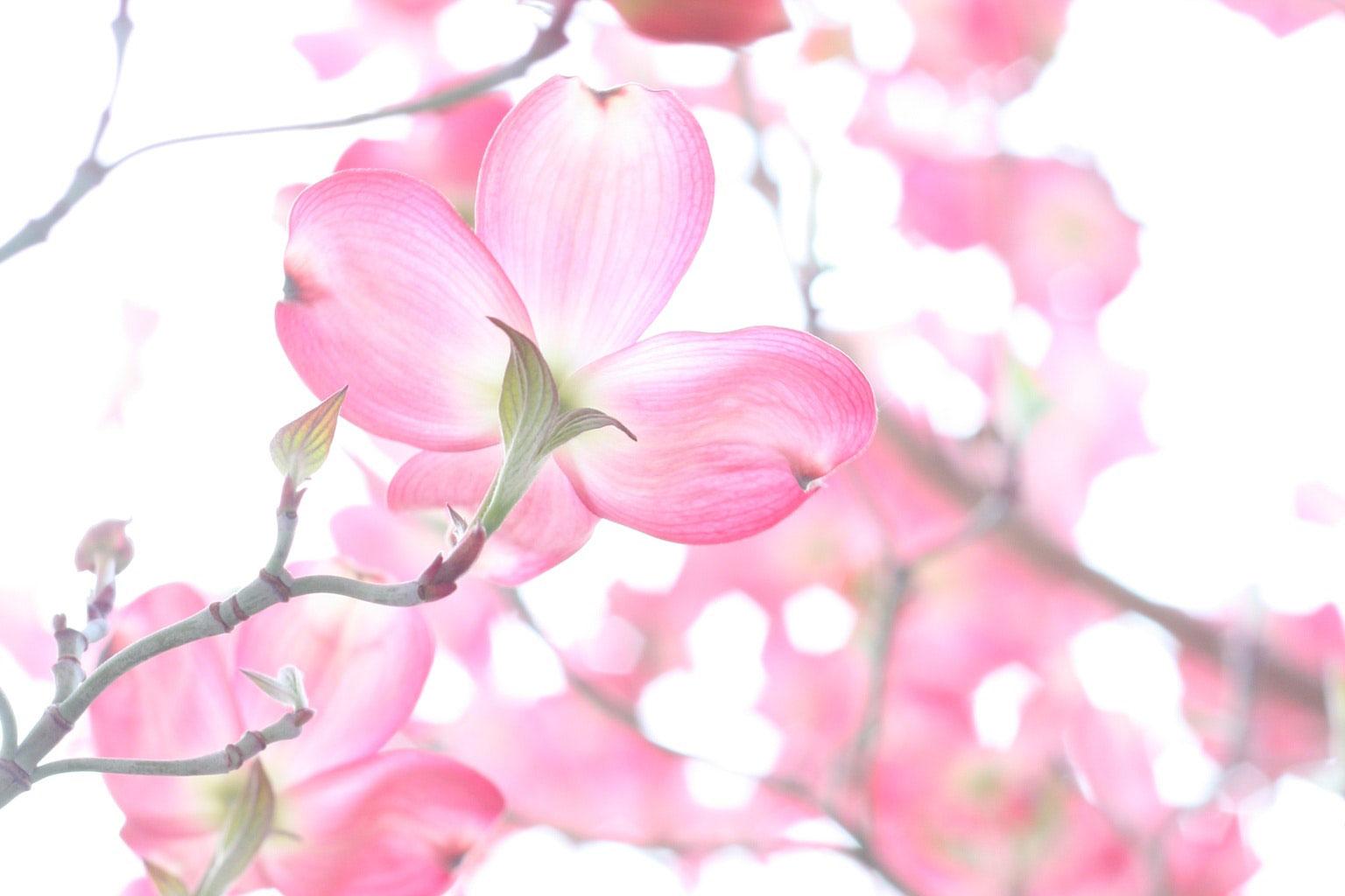 beautiful-blooming-branch-920985.jpg