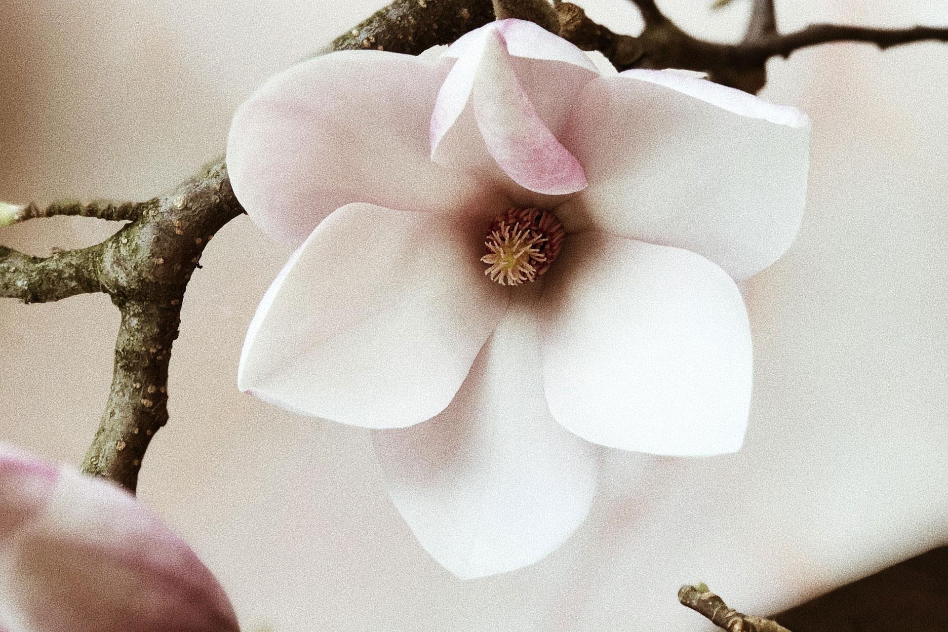 beautiful-blooming-blossom-931181.jpg