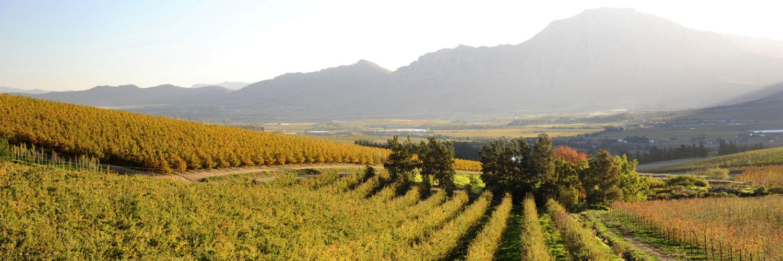 winelands-slider_compressed.jpg