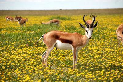 antelope-425161_1280.jpg