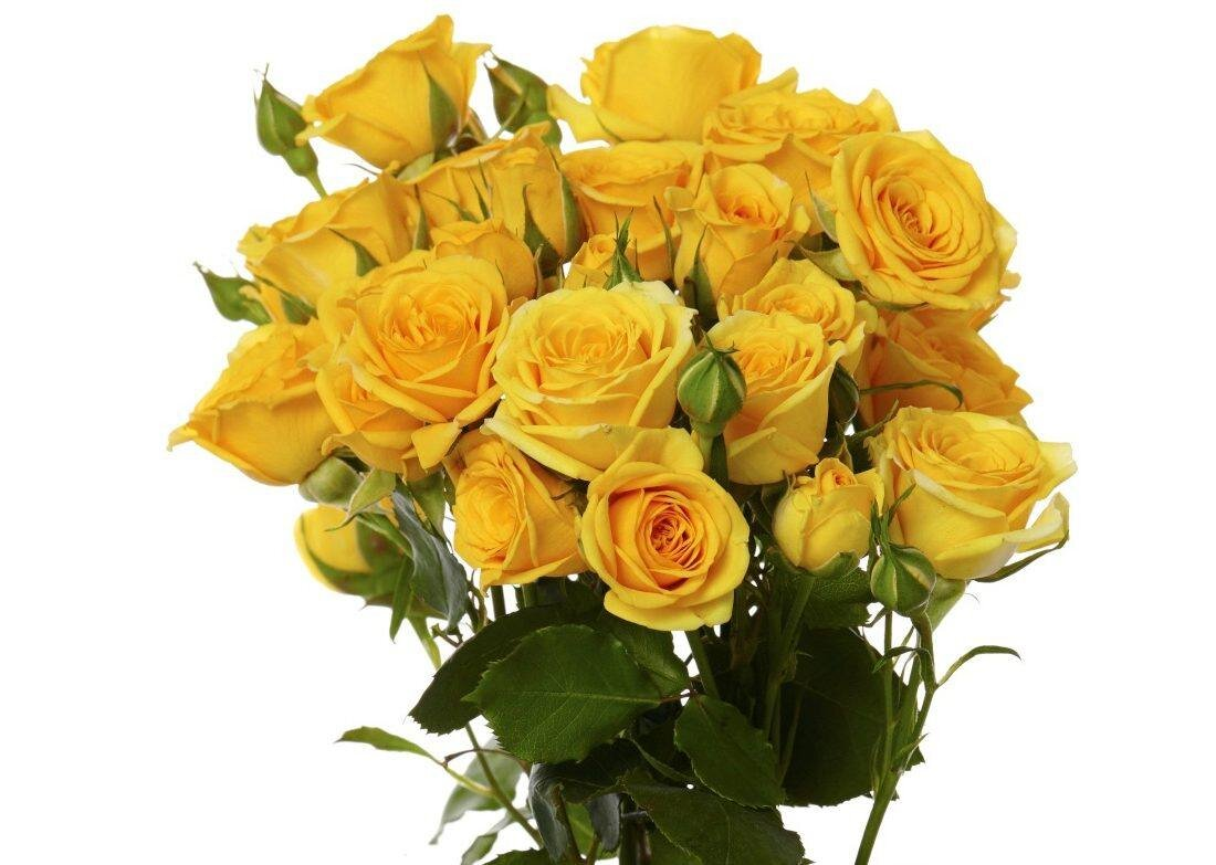 Yellow-Babe_1-2-1-1100x783-2.jpg