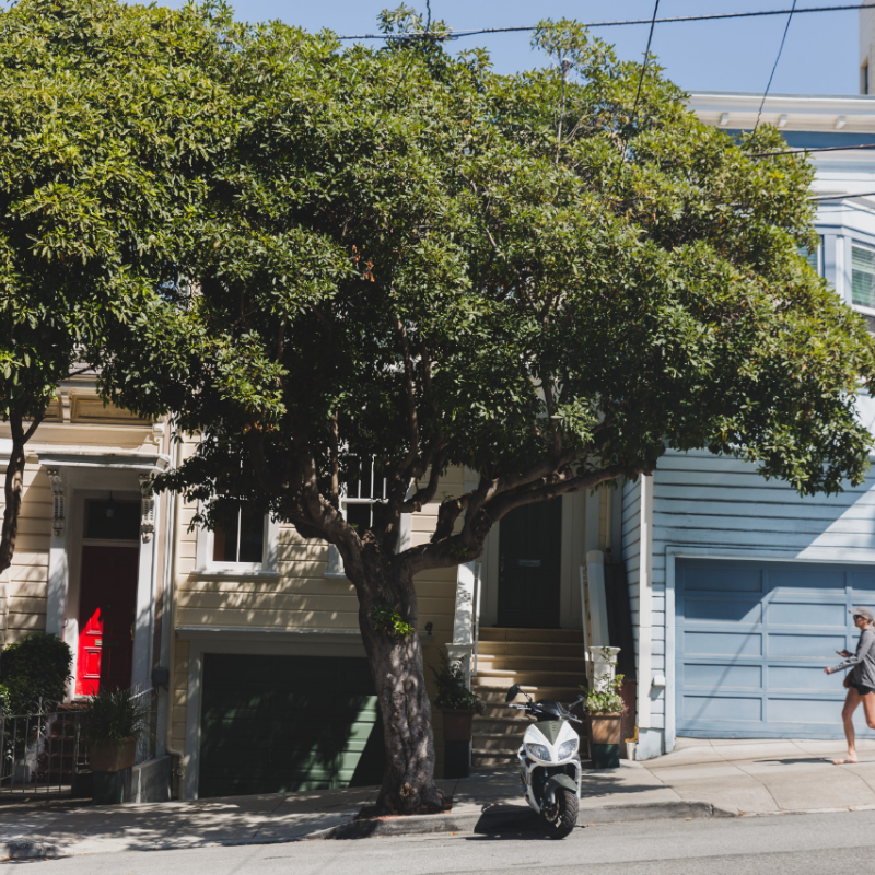 Cow Hollow -
