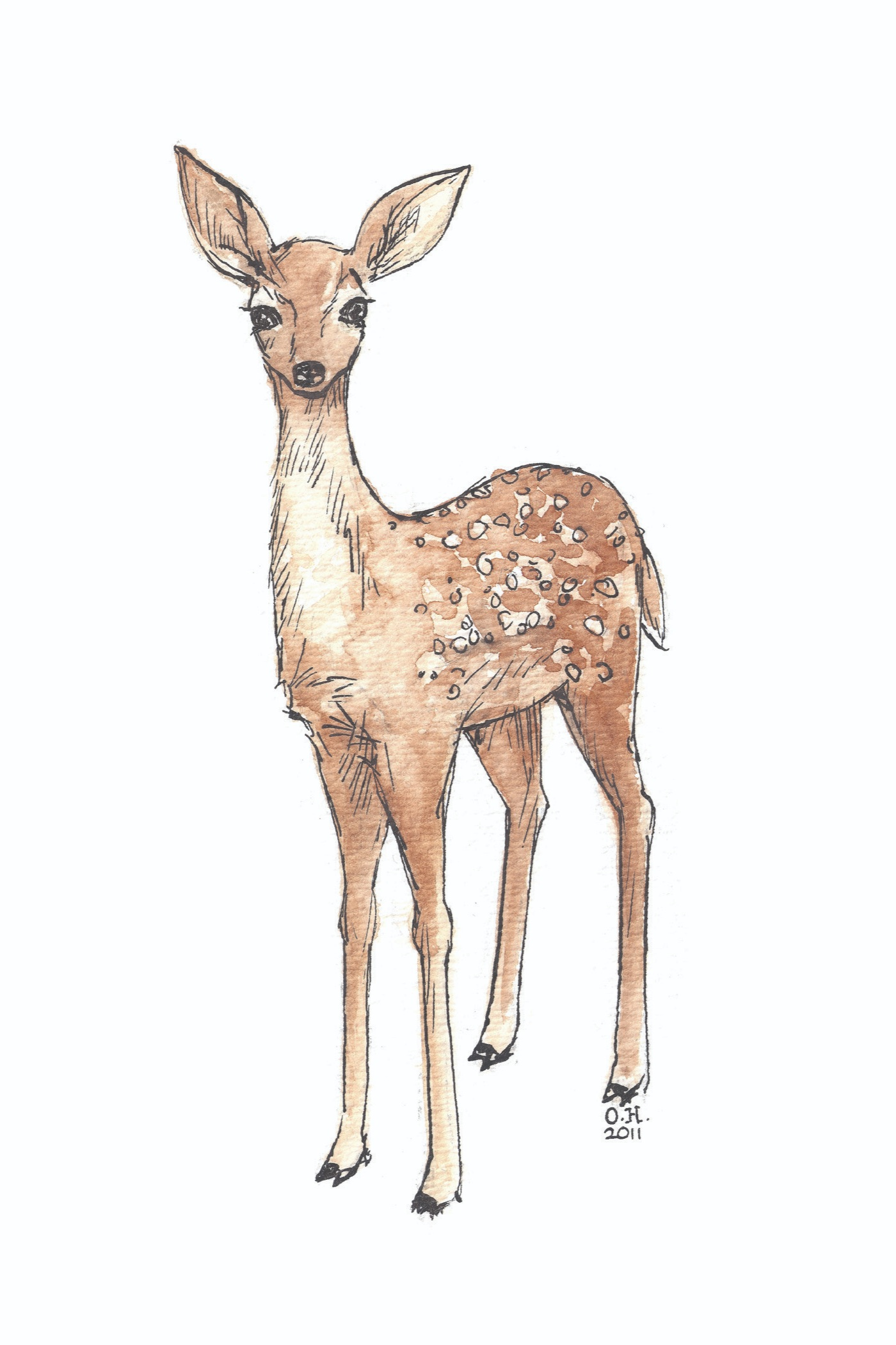 Fawn 2011 Watercolor and India ink